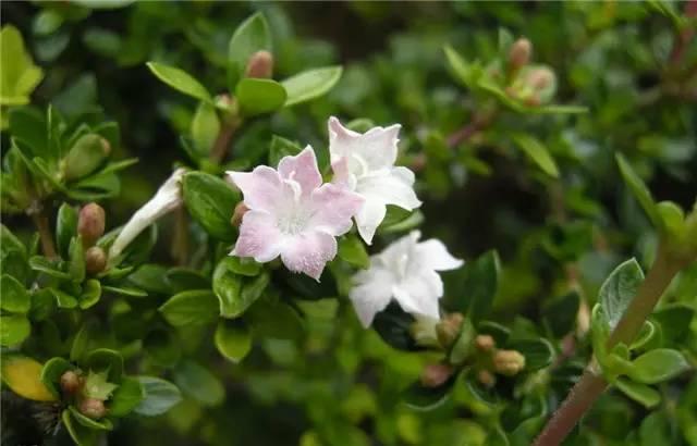 干货|近百种户外植物名称大全_68