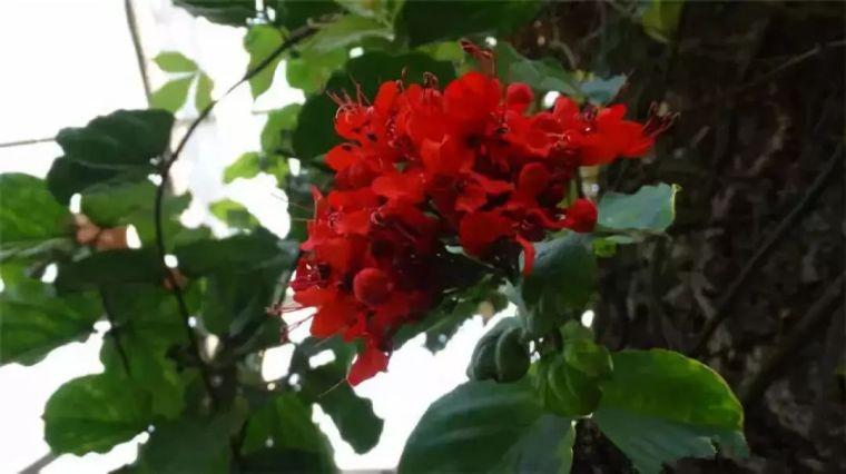 干货|近百种户外植物名称大全_76