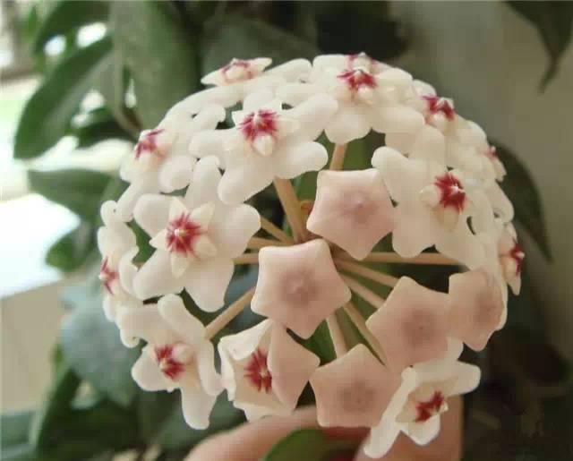干货|近百种户外植物名称大全_89