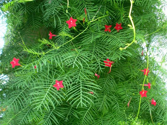 干货|近百种户外植物名称大全_83