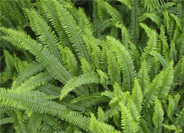 干货|近百种户外植物名称大全_95