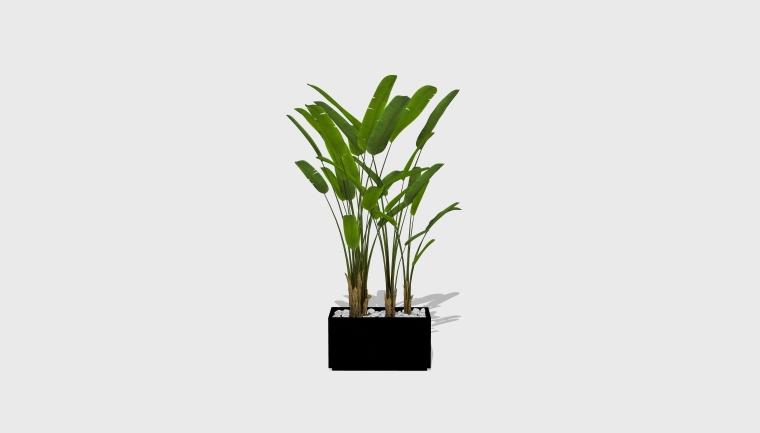 室内绿色植物SU模型_绿植(20套)