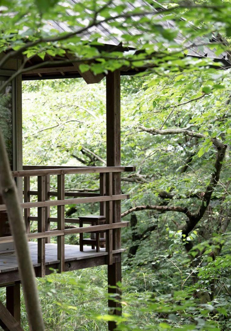 隐于森林的野奢酒店,极少人知道,体验胜于