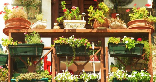 花卉租摆中您知道哪些花四季都开花?