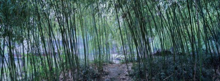 中国园林之父:没有他,江南美景会毁掉一半_4
