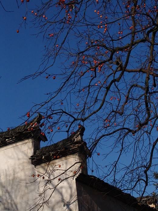 [合集]中国古建之美丨附70套古建&设计资料_193