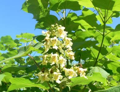 古代民居庭院种树植花讲究多_7