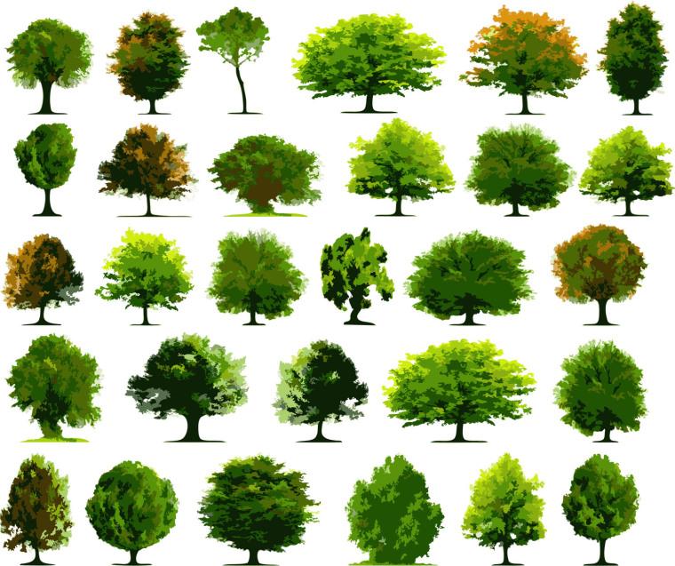 电脑手绘树35棵su模型
