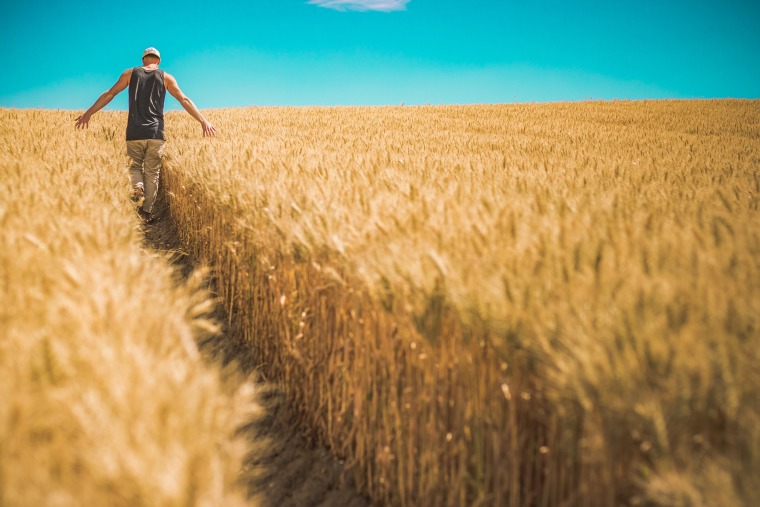 高标准农田图纸(含招标文件、控制价清单)