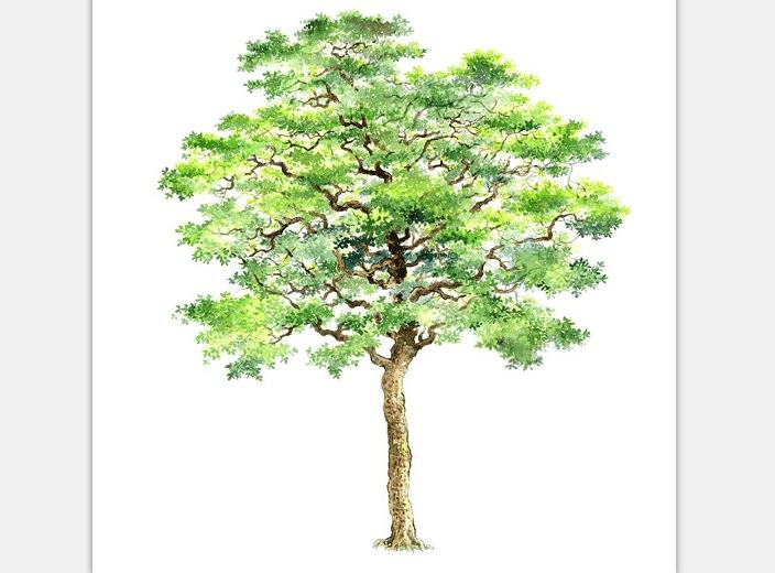 99张手绘树设计配景素材-手绘树设计素材2