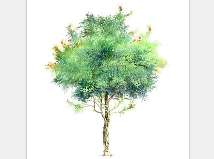 99张手绘树设计配景素材-手绘树设计素材3