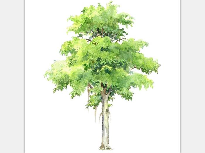 99张手绘树设计配景素材-手绘树设计素材5
