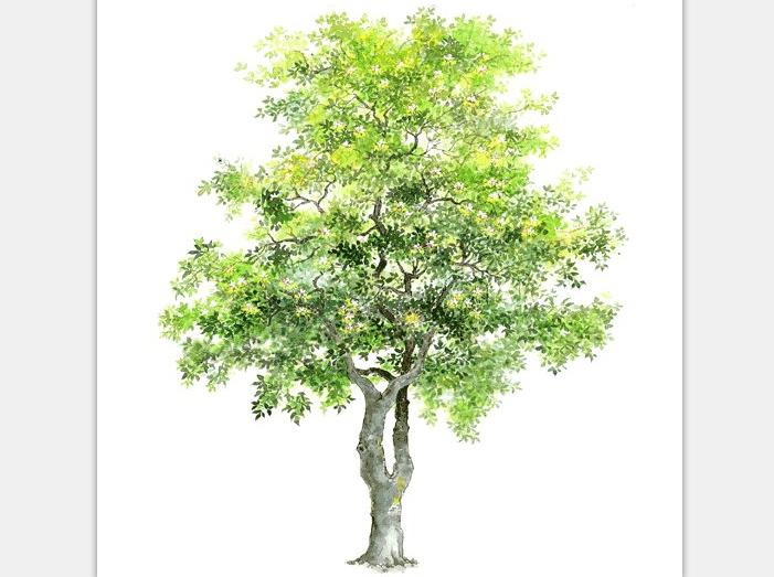 99张手绘树设计配景素材-手绘树设计素材4