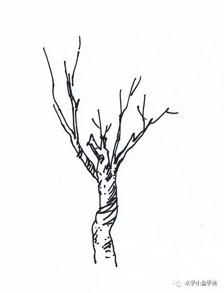 园林景观手绘|植物单体画法——乔木、灌木