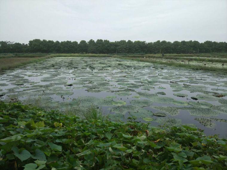湿地景观规划设计——植物配置