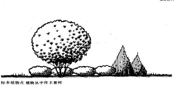 植物设计的学问·实用_36