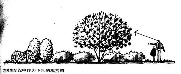 植物设计的学问·实用_85