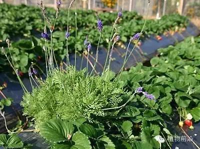 那些容易种植的美味香草植物