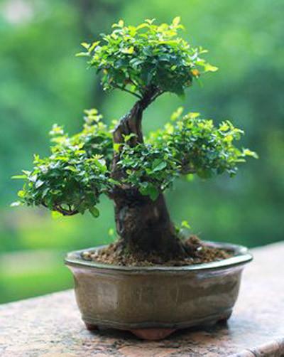 8种植物净化空气,还要空气净化器干嘛?_3