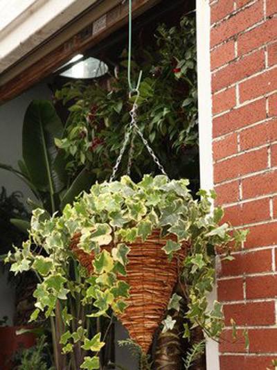 8种植物净化空气,还要空气净化器干嘛?_4