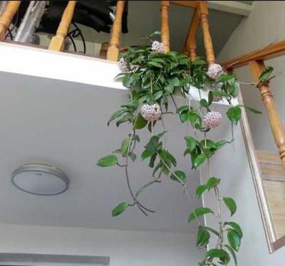 8种植物净化空气,还要空气净化器干嘛?_7