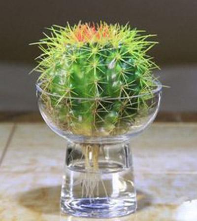 8种植物净化空气,还要空气净化器干嘛?_10