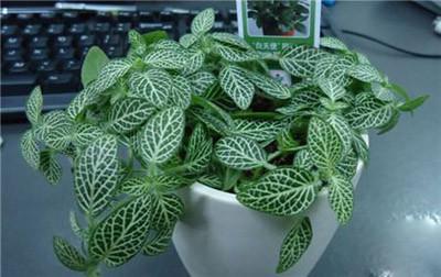 8种植物净化空气,还要空气净化器干嘛?_13