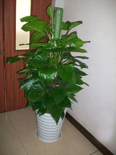 8种植物净化空气,还要空气净化器干嘛?_14