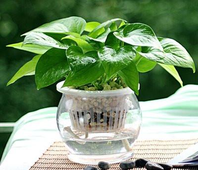 8种植物净化空气,还要空气净化器干嘛?_15