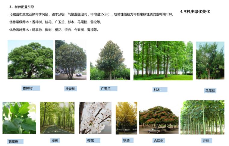 村庄绿化美化1