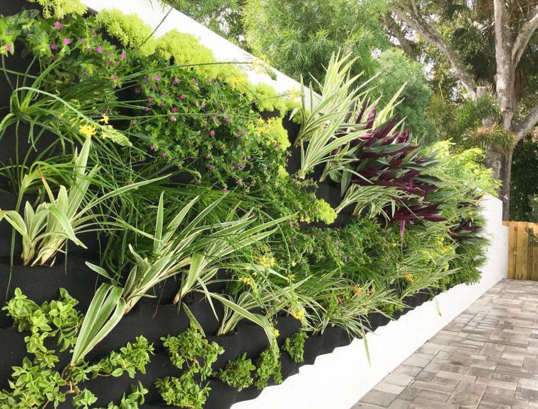 垂直绿化的常用设计形式