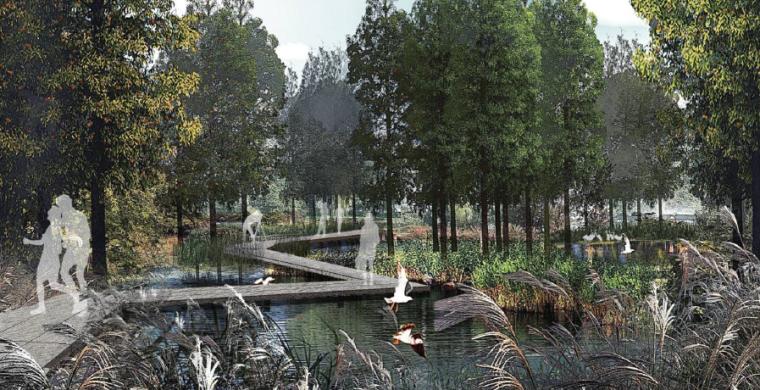 [四川]田园农耕文化湿地公园景观设计方案-生态湿塘净化区效果图