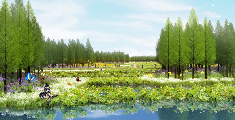 [四川]田园农耕文化湿地公园景观设计方案-水生植物景观效果图