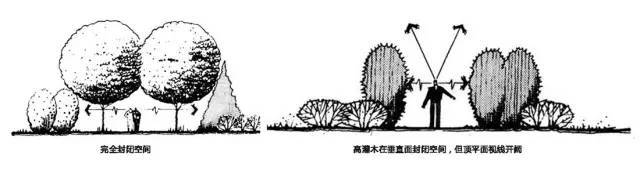 植物空间营造·知识汇总_11