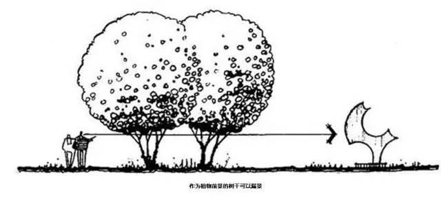 植物空间营造·知识汇总_20