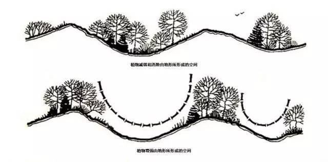 植物空间营造·知识汇总_17