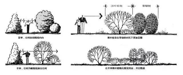 植物空间营造·知识汇总_28