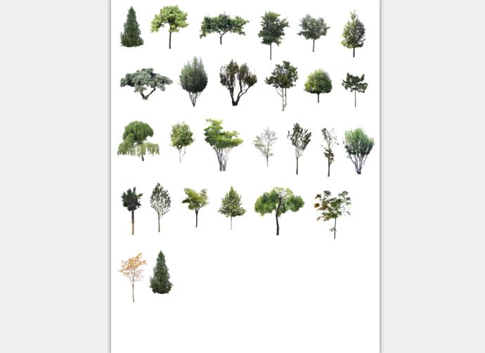 建筑景观常用树植物立面剖面PSD素材4
