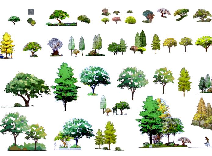 建筑景观常用树植物立面剖面PSD素材5