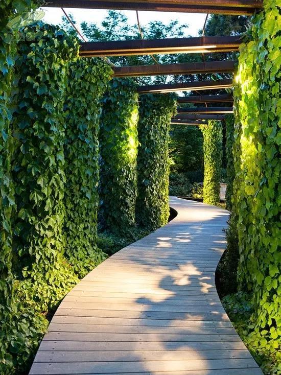 植物墙在庭院的应用