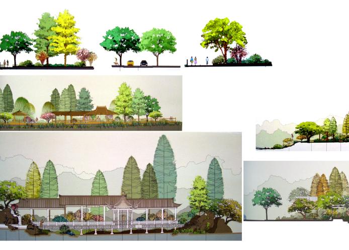 建筑景观常用树植物立面剖面PSD素材6