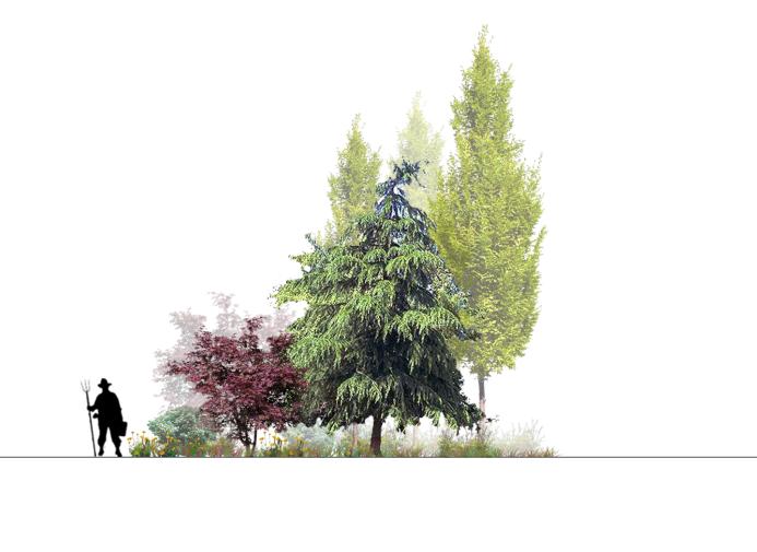 建筑景观常用树植物立面剖面彩图PSD素材