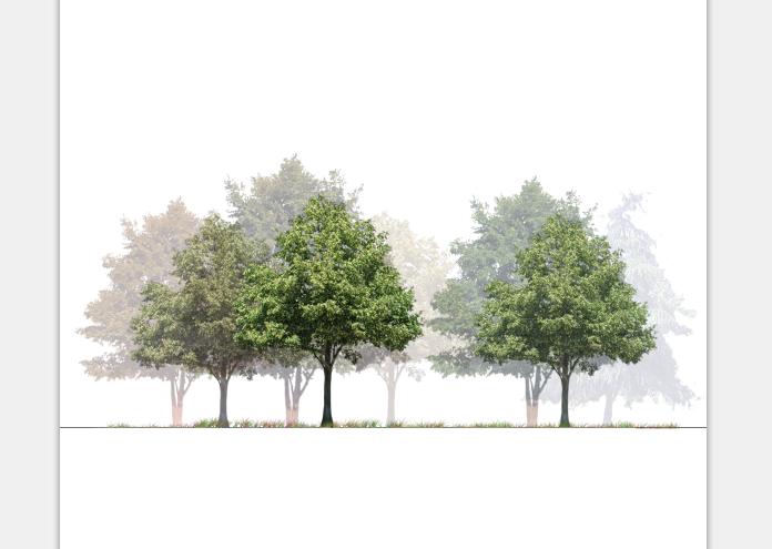 建筑景观常用树植物立面剖面PSD素材3