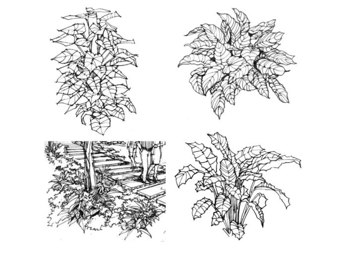 35张手绘配景练习示例(植物人物小品)-手绘配景练习示例2