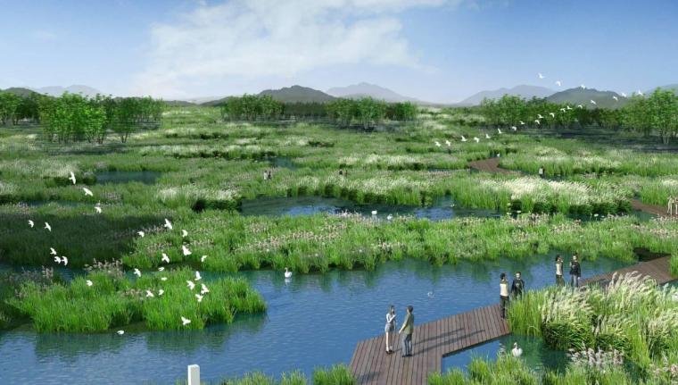 主河道湿地效果图
