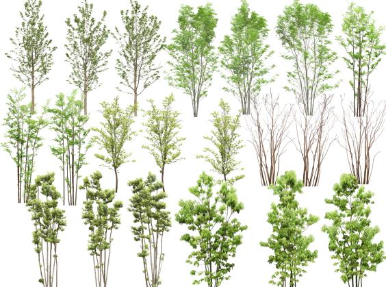 高清园林树木PS素材(1~5)