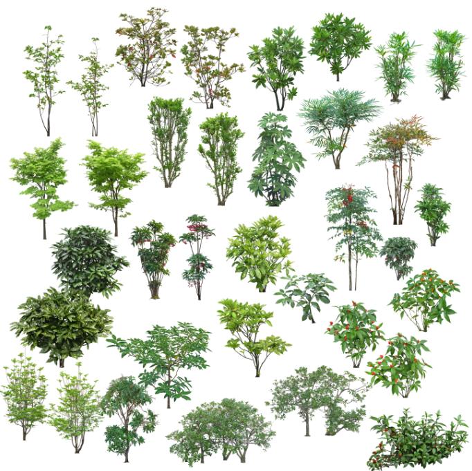高清园林树木PS素材(6)