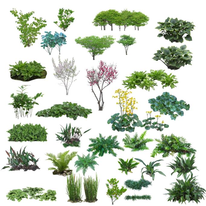 高清园林树木PS素材(7)