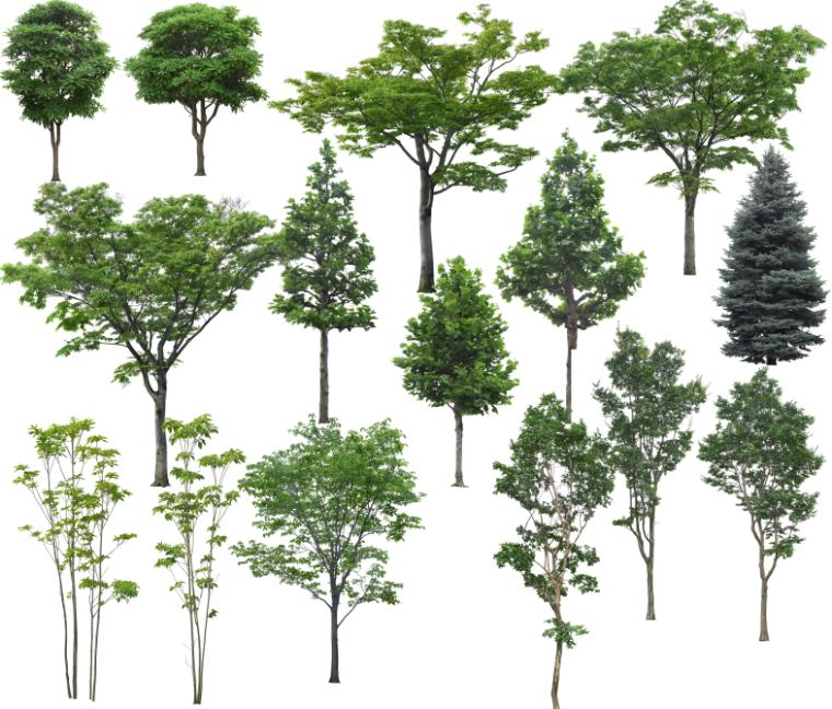 高清园林树木PS素材(10)-绿色乔木