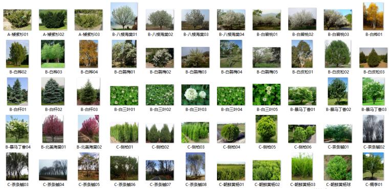 最全苗木表植物品种、苗木选型、苗木表图库-III区苗木选型标准图(沈阳、大连、北京、天津、天水)(1)